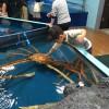 蒲郡市の竹島水族館のみどころ!規模は小さめですが良い所満載です